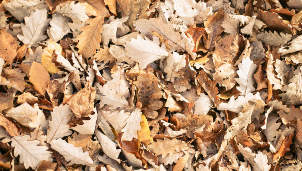 Есен, ама с песен
